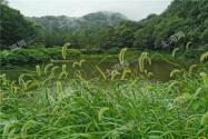 江西省耕地多少錢一畝?附2021土地征收補償標準!