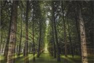 江西省林地多少錢一畝?林地征用補償標準多少錢一畝?