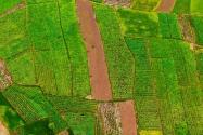 河北耕地多少錢一畝?2021耕地地力保護補貼多少錢一畝?