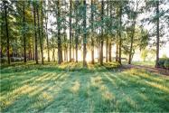 遼寧省林地多少錢一畝?林地的承包期是多少年?