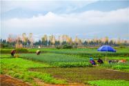 2021土地管理法農用地轉用政策:具體怎么審批?