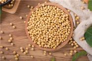 黃豆價格多少錢一斤2021?價格為什么暴漲?附黃豆價格行情最新價格走勢!