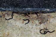 山蛩虫是怎么进家里的?怎么防止山蛩虫进家里?