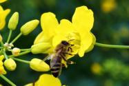 蜜蜂蛰了怎么处理好得快?五种方法快速消肿止痒!