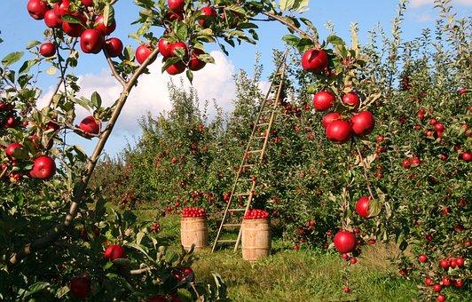 農村創業致富項目推薦