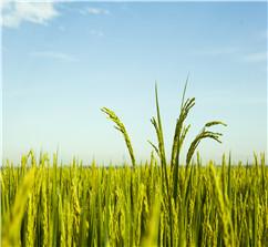 農業貸款需要什么條件?