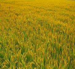 2021年強農惠農政策及歷年回顧