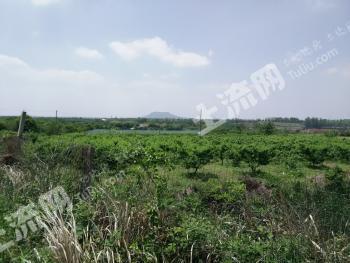 镇江句容市60亩果园转让 建筑面积200平方