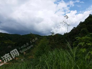 福州闽清县 30亩 畜牧养殖用地 转让
