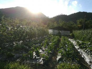 惠州惠阳区 100亩 水浇地 转让