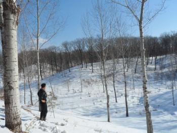 通化辉南县 30亩 有林地 转让