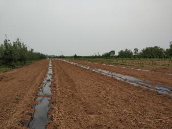 咸阳三原县20亩水浇地出租