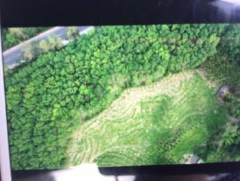 海南保亭黎族苗族自治县11亩林地-有林地转让