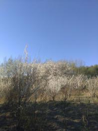 长春九台区30亩有林地转让
