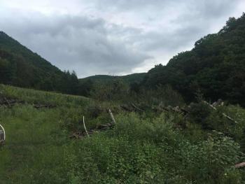 吉林延边安图县645亩林地转让