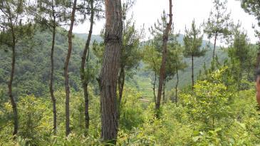 陕西300亩有林地出租
