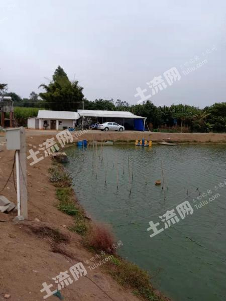 惠州博羅縣 120畝 坑塘 轉讓