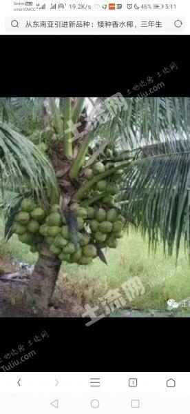 东南亚柬埔寨150000亩出租(4)
