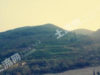大連普蘭店區安波鎮680畝有林地轉讓