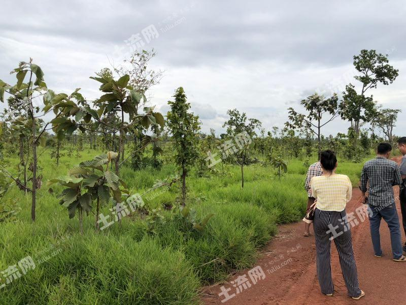 东南亚柬埔寨1500亩转让(1)