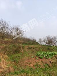 重慶永川區680畝水田旱地出租