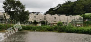 安徽合肥 500畝 果園 轉讓可以做親子游泳項目