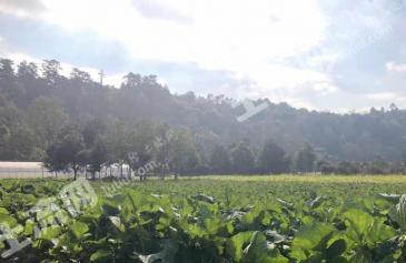 成都雙流區10畝耕地-水澆地出租