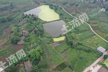 樂山市中區5畝土地轉讓,可修建茶廠等